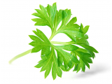 Parsley (Bunch)